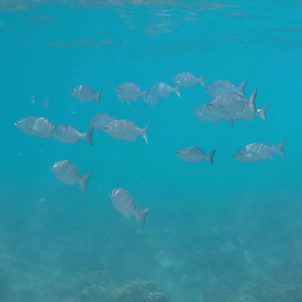 Wir sahen sehr viele verschiedene Fischschwärme.