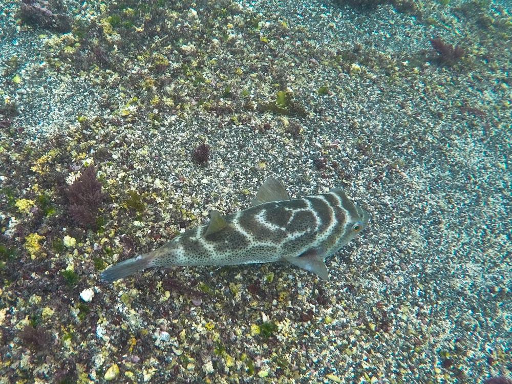 Galapagos: Los Tuneles am Cabo Rosa