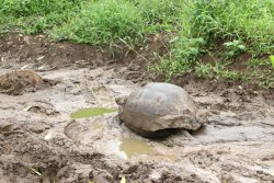 Herrlich - ein Bad im Galapagos-Spa!