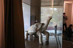 Lonesome George ist hinter Glas in der Charles Darwin Foundation ausgestellt.
