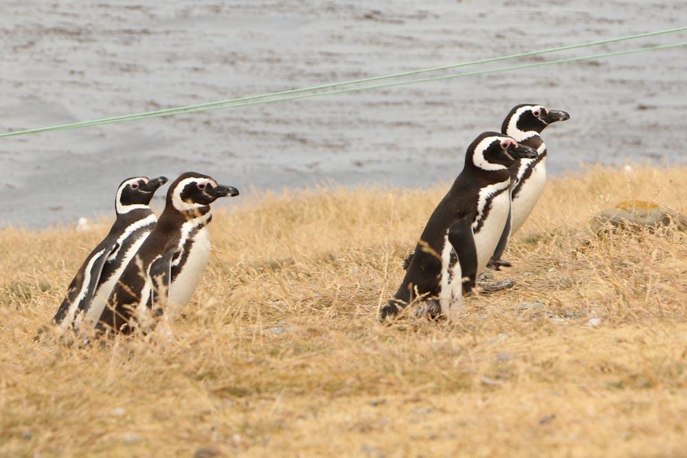 Monumento Natural Los Pingüinos