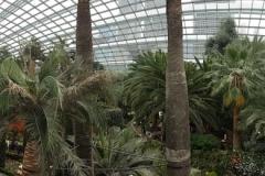 Singapore Gardens by the bay Gewächshäuser-16