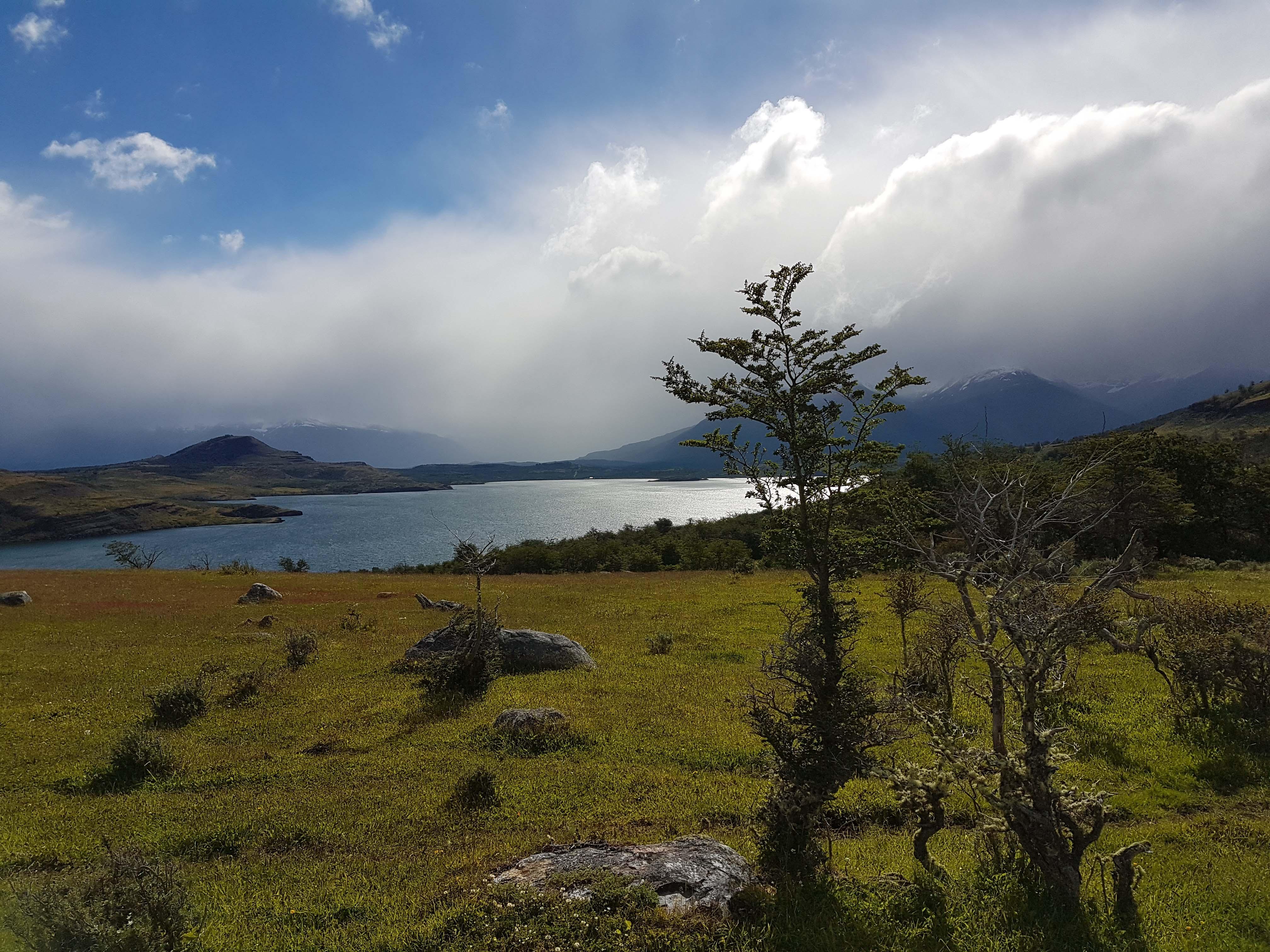 CHILE: Pingo Salvaje