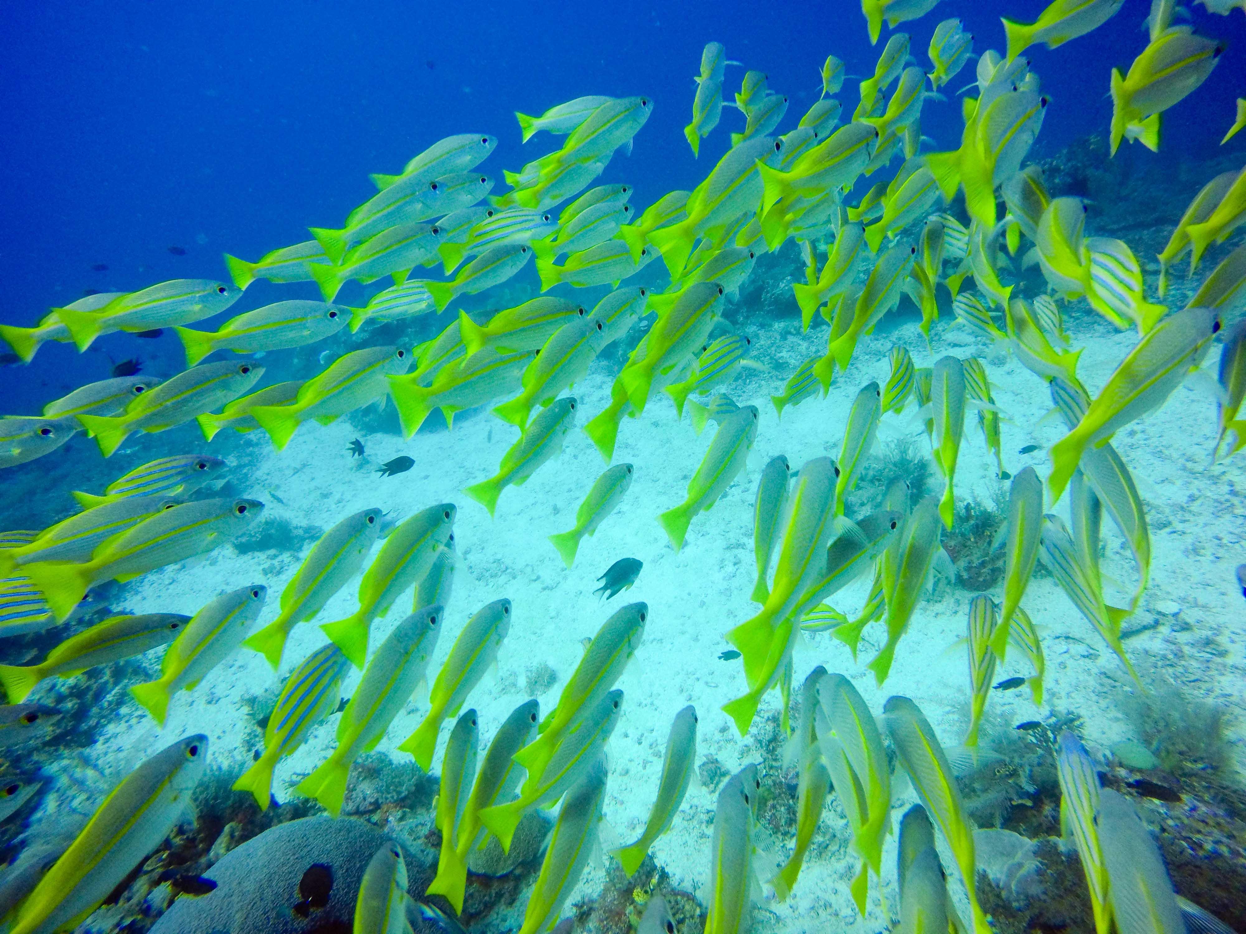 RAJA AMPAT: Tausende Fische