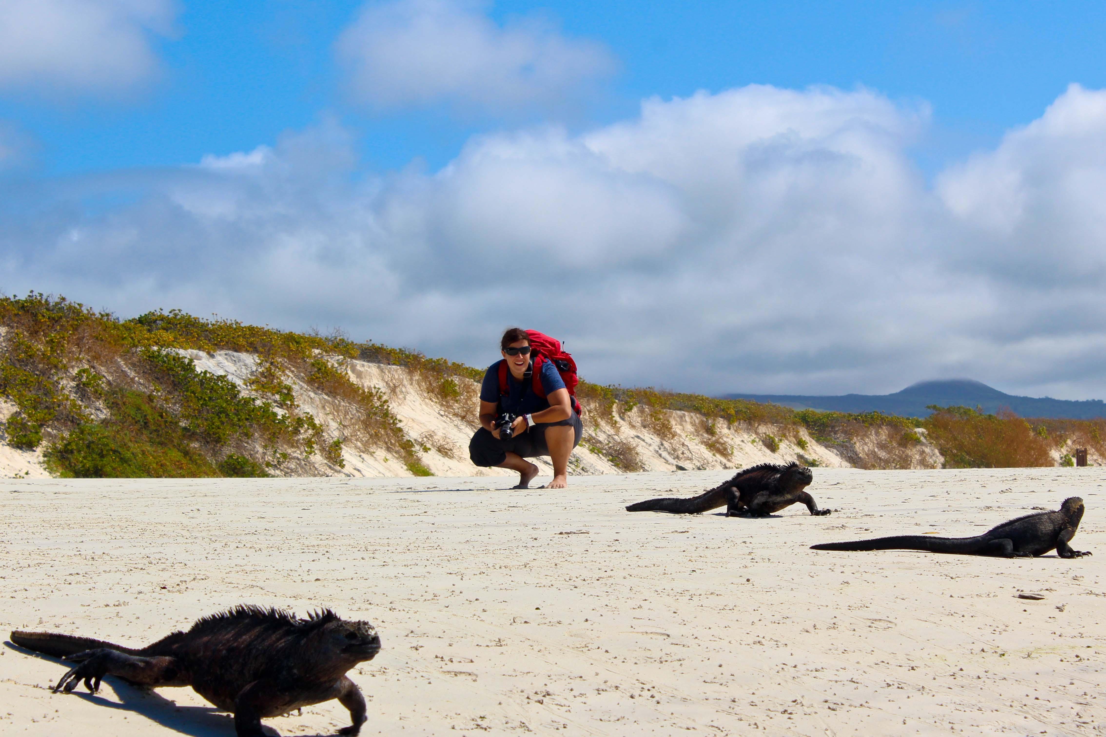 GALAPAGOS: Iguanas an der Playa Tortuga
