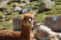 PERU: Hola!