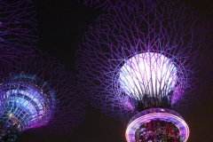 Singapore Gardens by the bay Supertrees