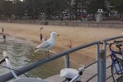 Australien-Sydney-24